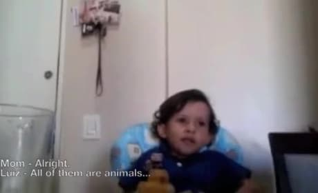 Child Refuses to Eat Octopus, Wants Animals to Live