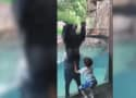 Bear Plays with Boy in Cutest Video You'll See Today