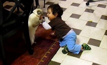 meet the parents cats vs dogs as pets