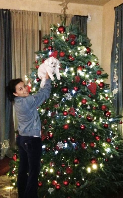 celebrities decorate for the holidays  the hollywood gossip