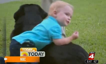 Dog Helps Parents Expose Child's Abusive Babysitter