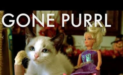 Kittens Recreate Gone Girl, Present... Gone Purrl!