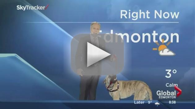 Dog Attacks Weatherman on Live TV