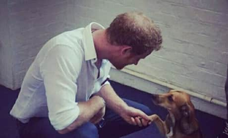 Prince Harry Meets Jasper The Dog