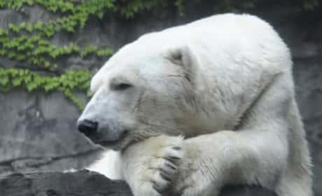 Gus the Polar Bear Passes Away