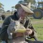 Wombat Eating Corn