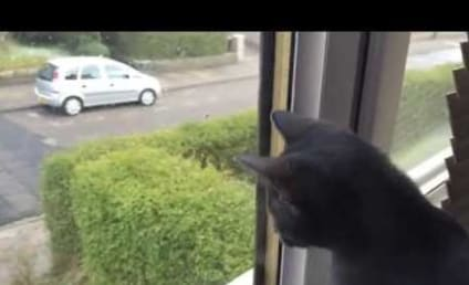 Kitten Witnesses First-Ever Snowfall, Reacts with Glee