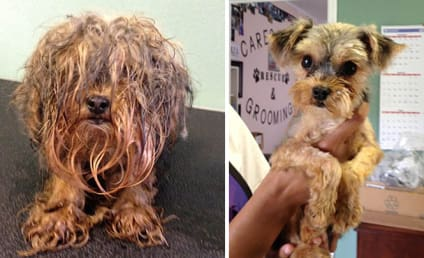 13 Before-and-After Rescue Dog Photos (#12 is AMAZING!)