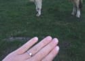 This Man Proposed to His Girlfriend on the Side of a Cow