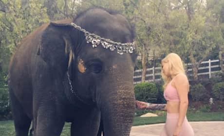 Iggy Azalea, Elephant