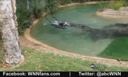 Crocodile Tries To Eat Lawn Mower