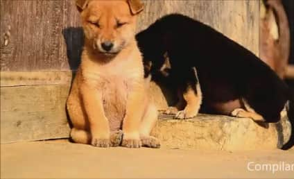 Animals Try to Stay Awake: A Cute Compilation