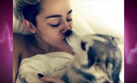 Miley Cyrus' Dog Dies