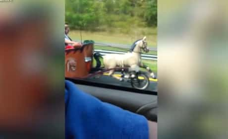 Horse-Drawn Chariot Car: Spotted on the Highway!