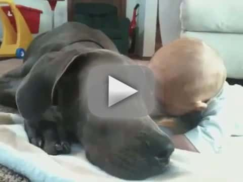 Great Dane Really Wants to Play with Baby