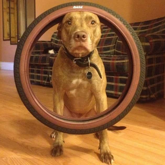Dog Balances Tire
