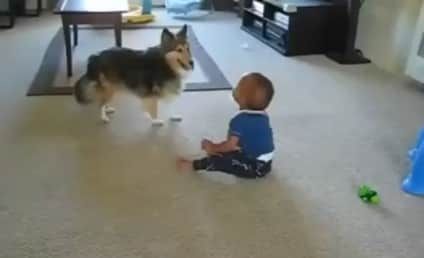 Small Dog Runs Around, Baby Laughs Hysterically