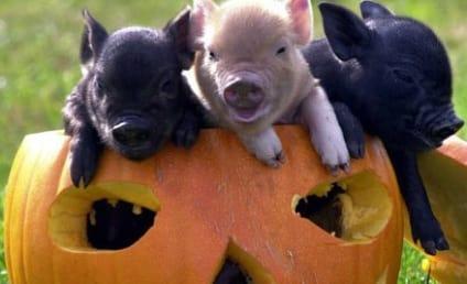 PETA Pissed at Paris Hilton Pig Purchase