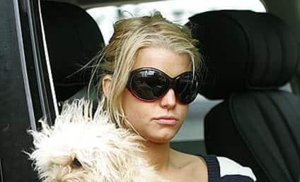 Jessica Simpson to Mourn Dog on Entourage