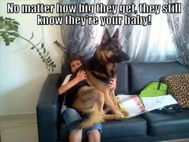 A Lap Dog