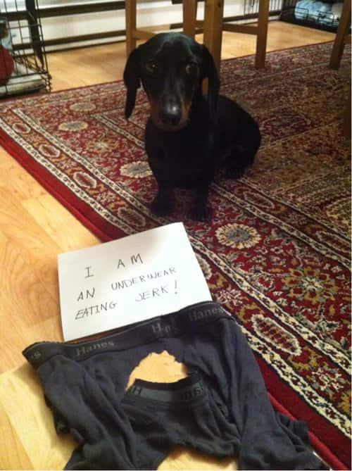But... underwear tastes good.