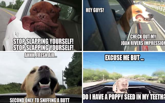 Dog take road trips wheeee getting cheeky