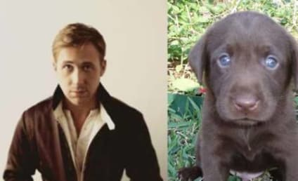 11 Puppies Who Could Actually Be Cuter Than Ryan Gosling