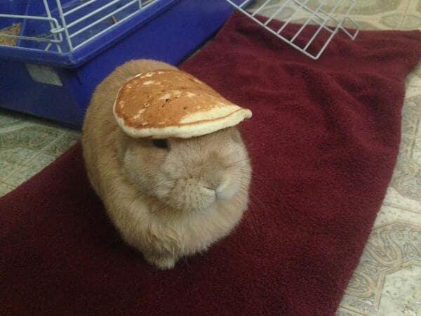 A bunny wearing a pancake hat.