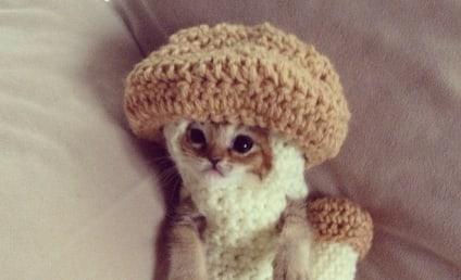 Injured Kitten Dons Crocheted Mushroom Costume, Melts the Web