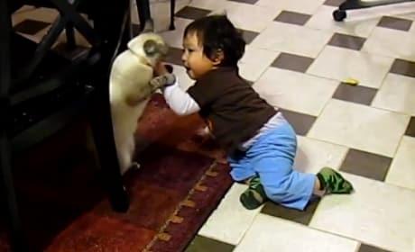 Kittens vs. Kids