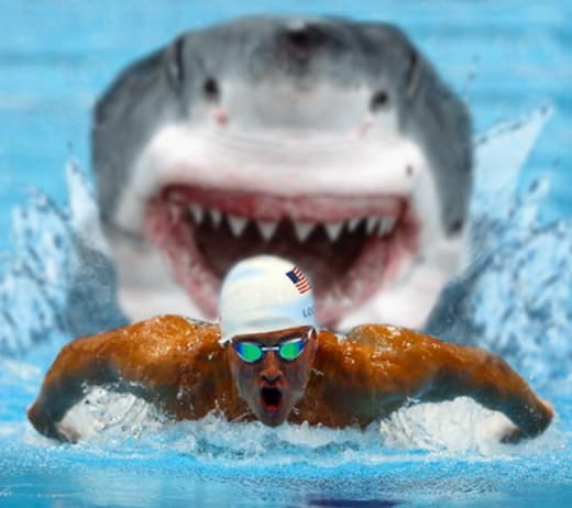 phelps and a shark