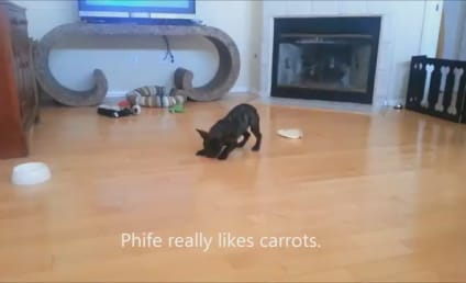 Bulldog FLIPS OUT Over Carrot: Give It to Me!