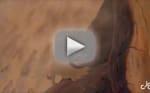 Rihanna Trolls Kevin Durant Via Hilarious Lion King Parody