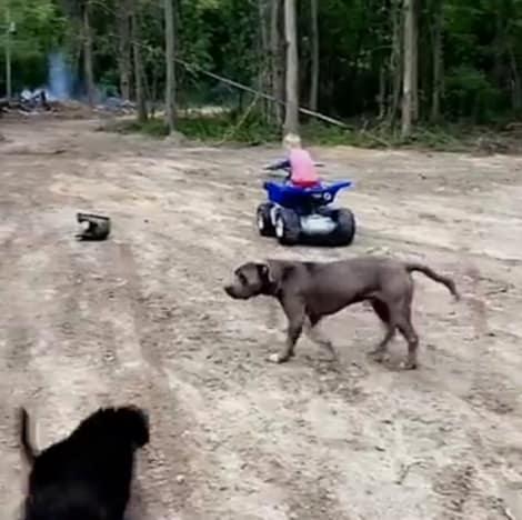 Jenelle Evans Dogs