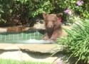 Bear Takes Over Man's Hot Tub, Drinks His Margarita
