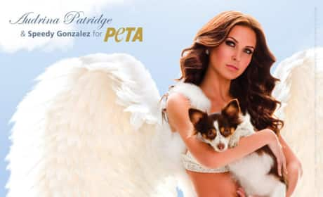 Audrina Patridge: PETA Angel