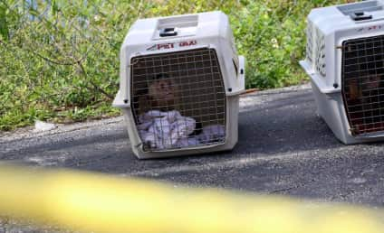 """Florida Woman's Body Found in Motel With Live Monkeys, """"Incoherent Man"""""""