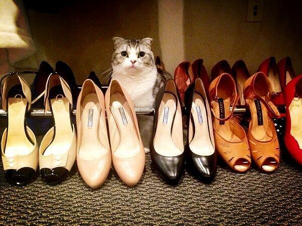 You Get Your Pick of Shoes