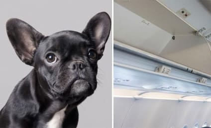 Dog Forced Into Overhead Bin Dies on Board United Flight