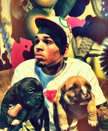 Chris Brown, Dogs