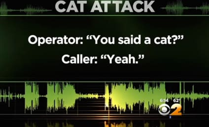 """Listen to This Man Call 911 Over """"Aggressive"""" Pet Cat"""