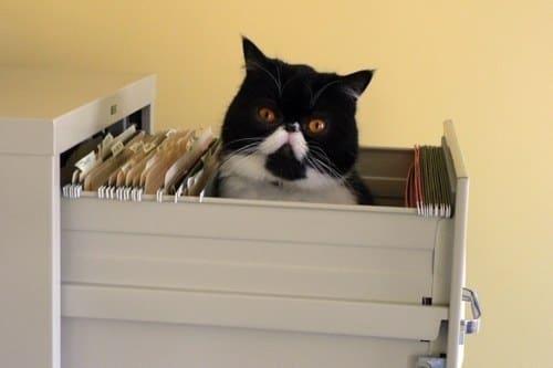 Adminstrative Assistant Cat