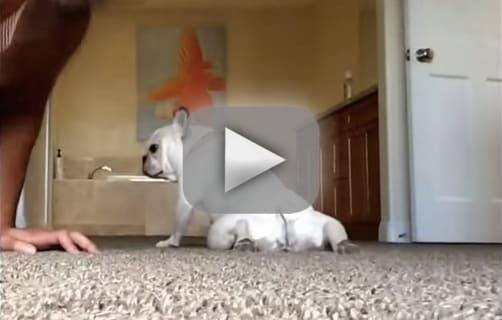Can Dogs Do Sit Ups