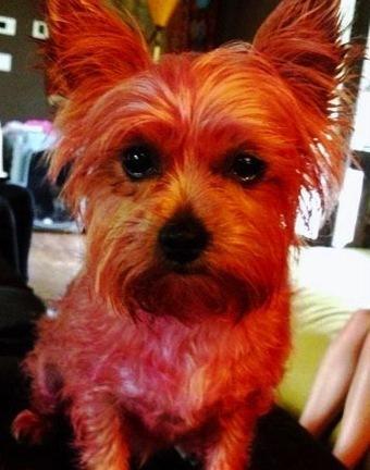 Miley Cyrus' Dog Lila