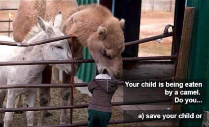 Camel Starts Eating Your Kid: What Do You Do?
