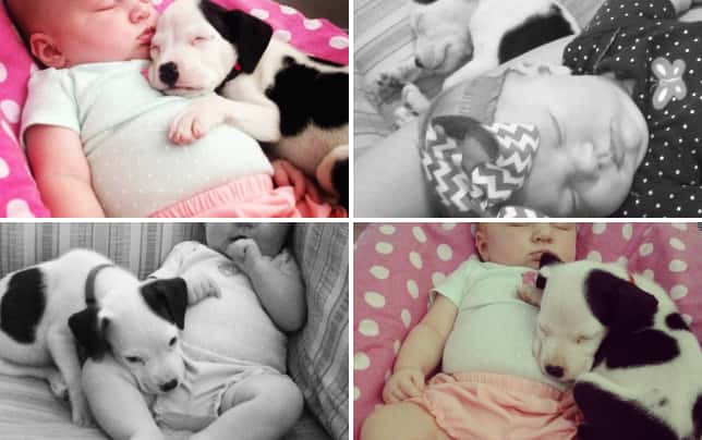 Baby and pit bull photos adorable bffs baby and puppy nap time