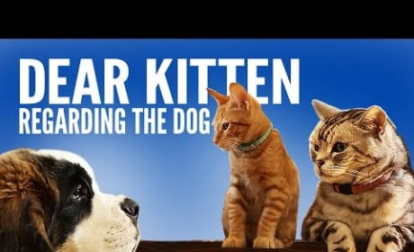 Cat Explains Concept of Dog to a Kitten