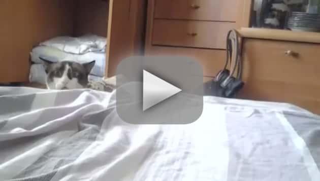 Cats Creepin'