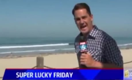 Reporter Freaks the Eff Out Over Bug on Live TV