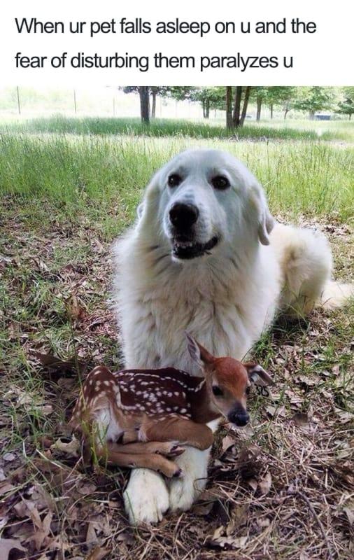 Unexpected Best Friend Alert!